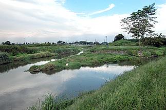 水位 古 利根川
